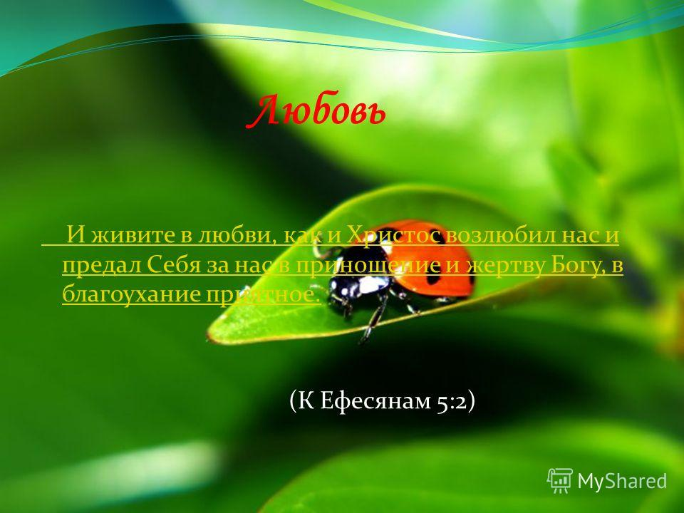 Любовь И живите в любви, как и Христос возлюбил нас и предал Себя за нас в приношение и жертву Богу, в благоухание приятное. (К Ефесянам 5:2)