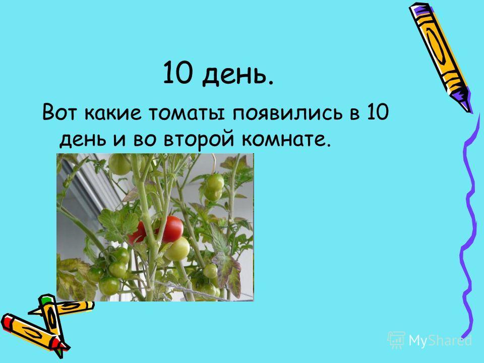 10 день. Вот какие томаты появились в 10 день и во второй комнате.