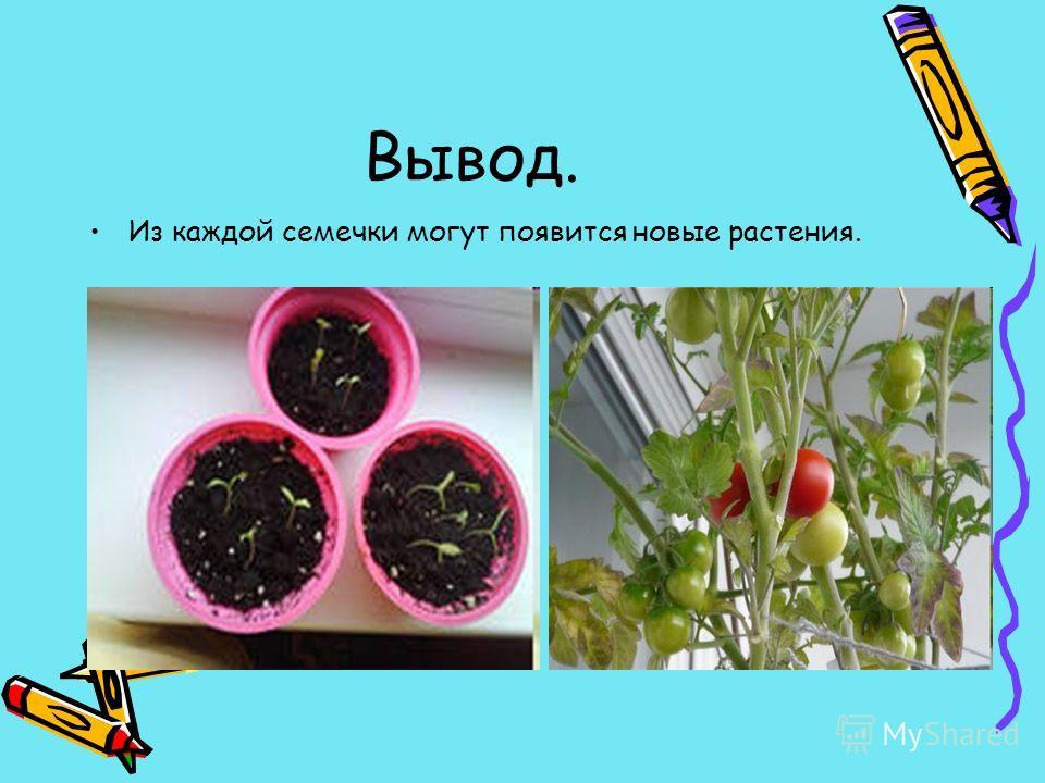 Вывод. Из каждой семечки могут появится новые растения.