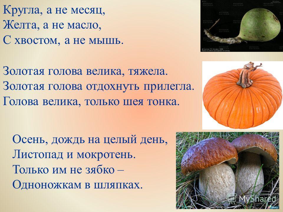 Кругла, а не месяц, Желта, а не масло, С хвостом, а не мышь. Золотая голова велика, тяжела. Золотая голова отдохнуть прилегла. Голова велика, только шея тонка. Осень, дождь на целый день, Листопад и мокротень. Только им не зябко – Одноножкам в шляпка