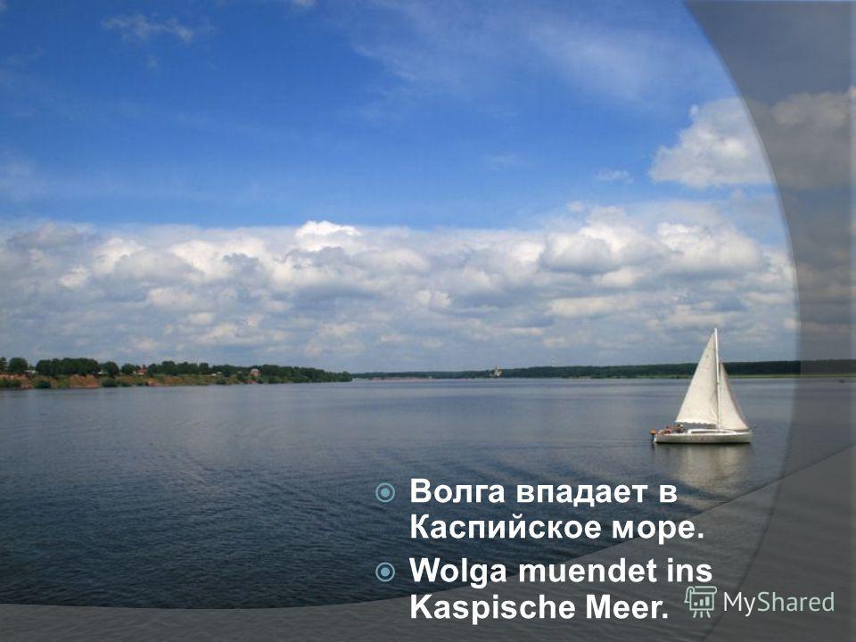 Волга впадает в Каспийское море. Wolga muendet ins Kaspische Meer.