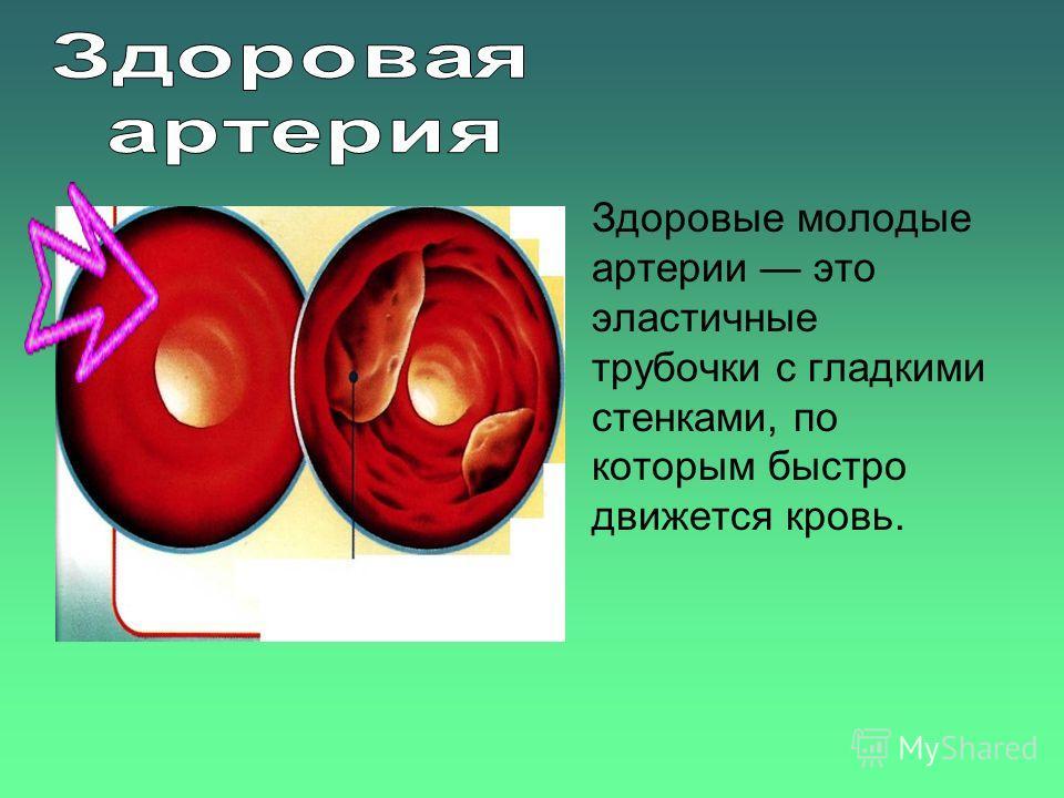 Здоровые молодые артерии это эластичные трубочки с гладкими стенками, по которым быстро движется кровь.