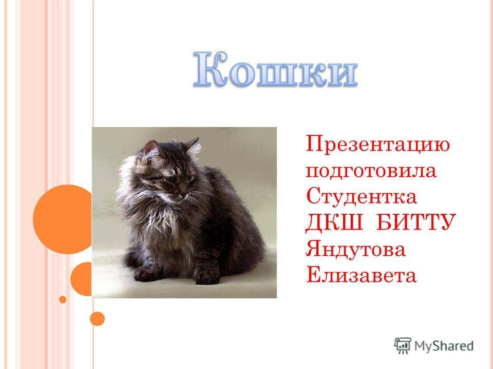 Презентацию подготовила Студентка ДКШ БИТТУ Яндутова Елизавета
