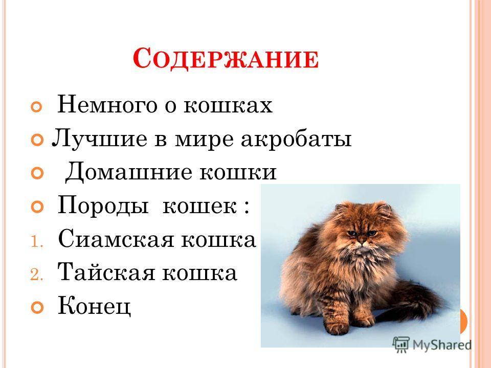 Презентация кот акробат