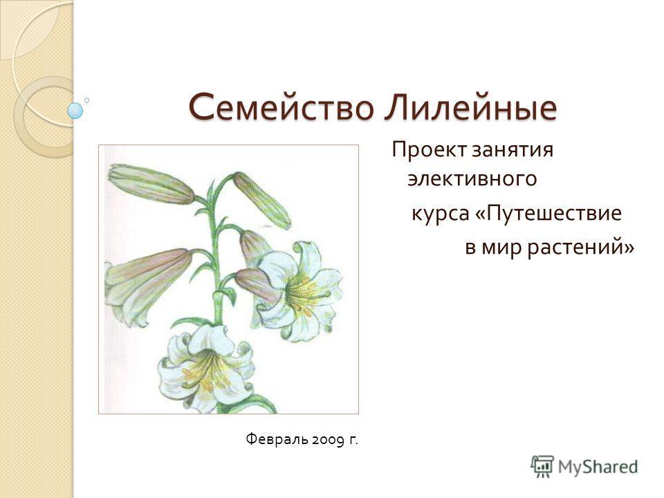 C емейство Лилейные Проект занятия элективного курса « Путешествие в мир растений » Февраль 2009 г.