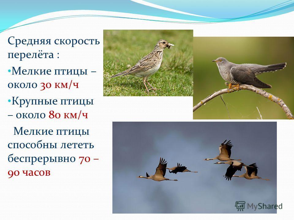 Средняя скорость перелёта : Мелкие птицы – около 30 км/ч Крупные птицы – около 80 км/ч Мелкие птицы способны лететь беспрерывно 70 – 90 часов