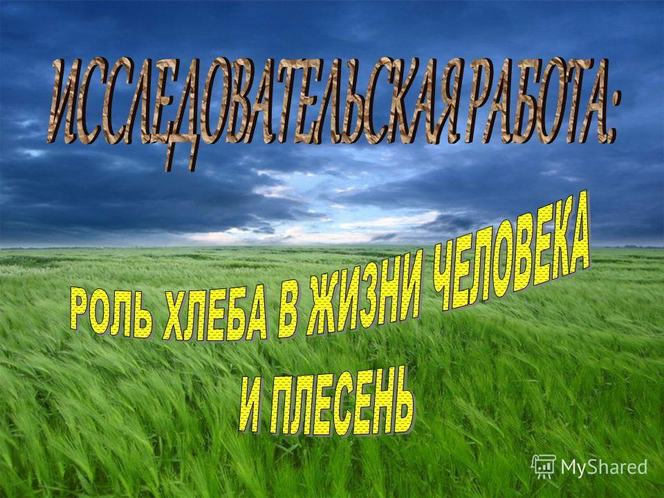 Картинки колоски пшеницы и ржи