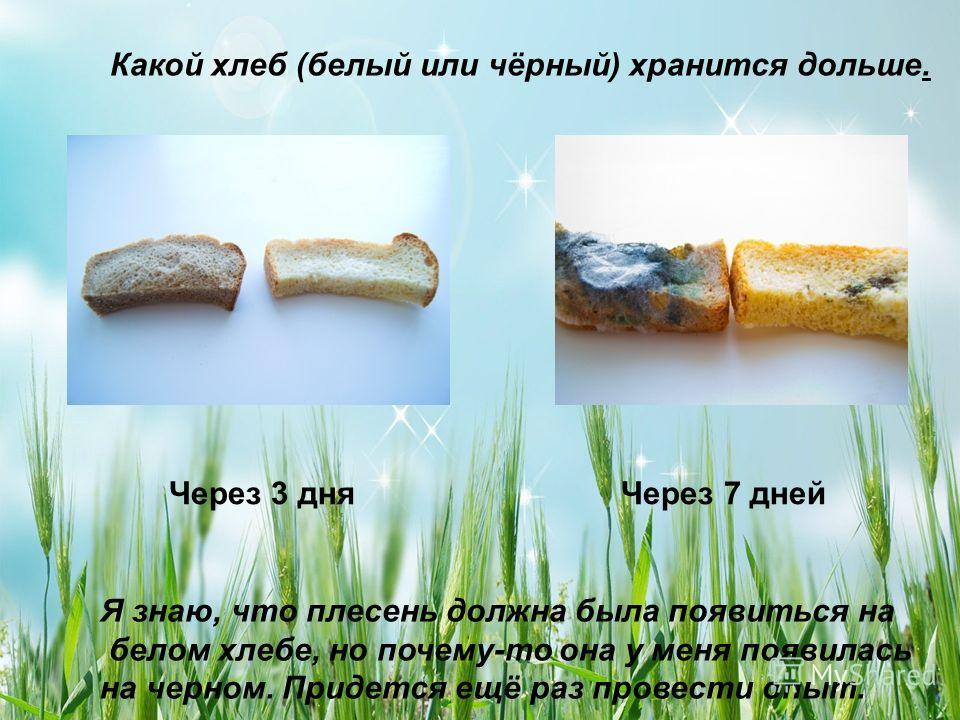 Какой хлеб (белый или чёрный) хранится дольше. Через 3 дня Через 7 дней Я знаю, что плесень должна была появиться на белом хлебе, но почему-то она у меня появилась на черном. Придется ещё раз провести опыт.