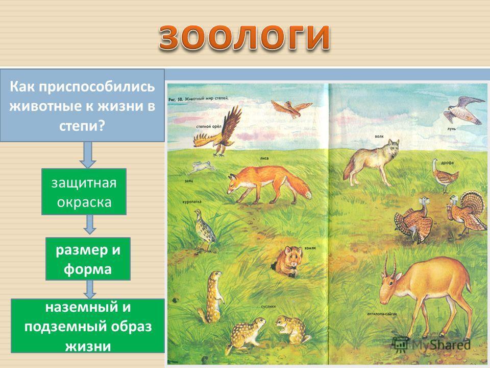 Как приспособились животные к жизни в степи ? защитная окраска размер и форма наземный и подземный образ жизни