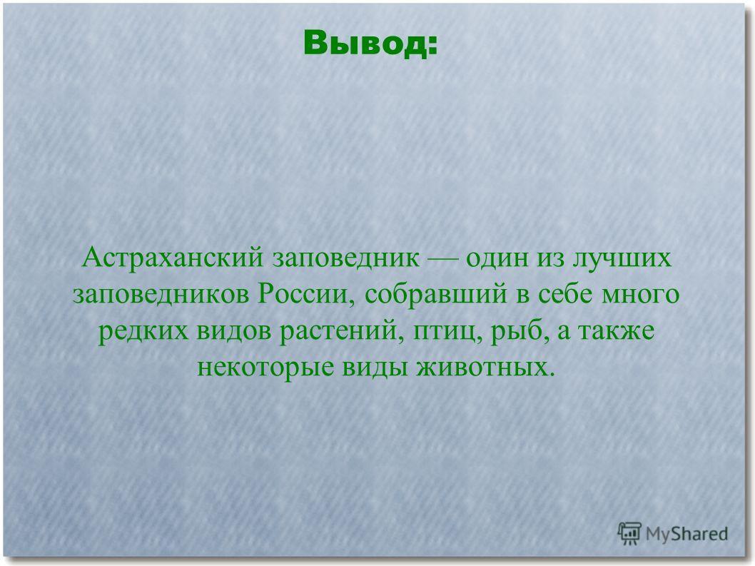 Астраханский заповедник один из лучших заповедников России, собравший в себе много редких видов растений, птиц, рыб, а также некоторые виды животных. Вывод: