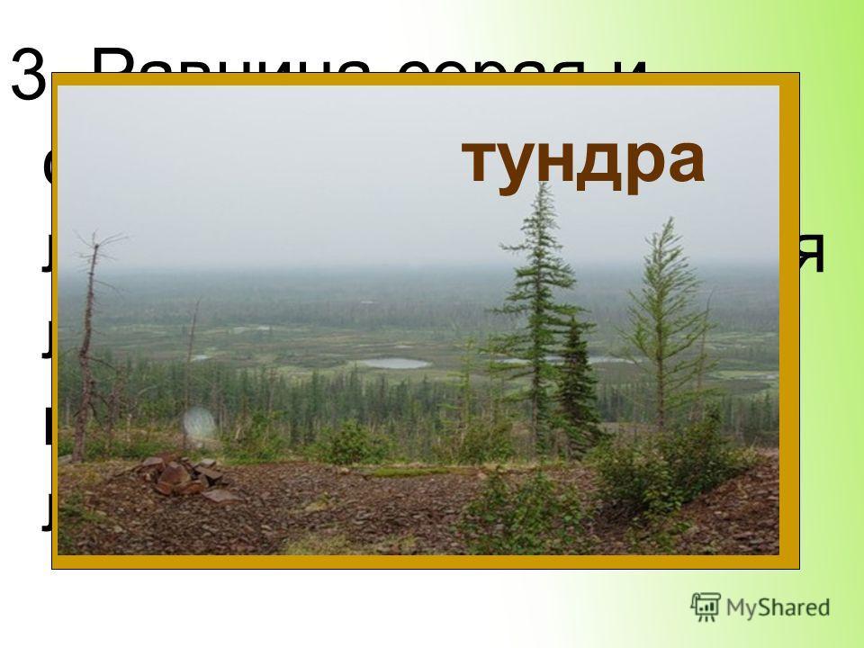 3. Равнина серая и сырая. Мох, кочки, лужи. Вдали виднеется лес – высотой по колено. Олени ходят лениво. тундра