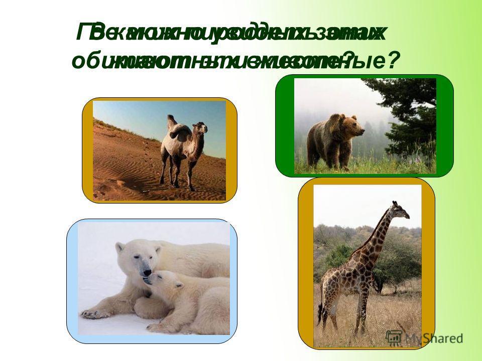 В каких пиродных зонах обитают эти животные? Где можно увидеть этих животных вместе?
