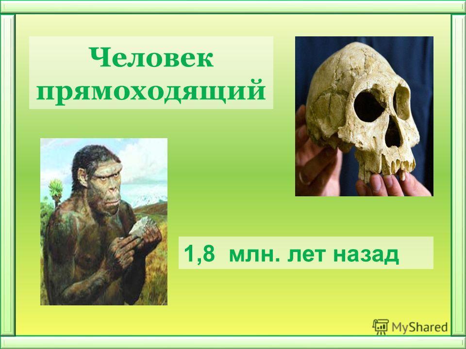 Человек прямоходящий 1,8 млн. лет назад