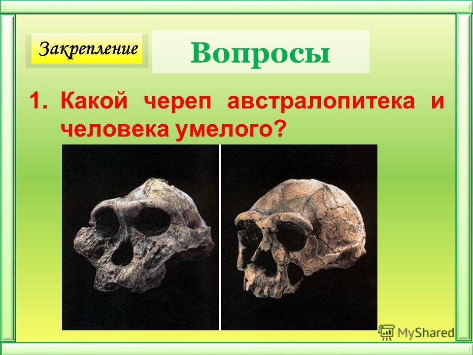 Вопросы 1.Какой череп австралопитека и человека умелого? Закрепление