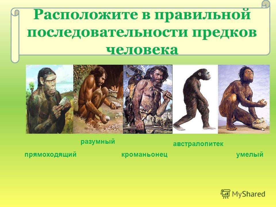 Расположите в правильной последовательности предков человека австралопитек разумный кроманьонецумелыйпрямоходящий