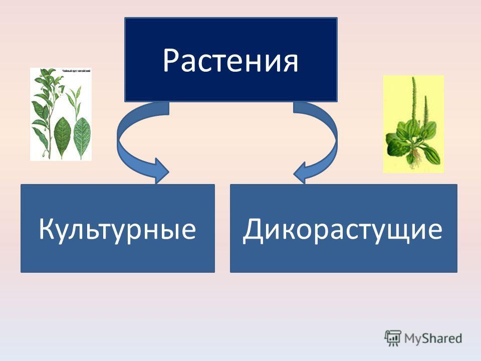 Растения КультурныеДикорастущие