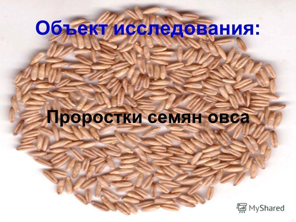Объект исследования: Проростки семян овса