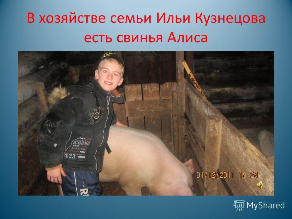 Домашние животные в личных хозяйствах учащихся нашего класса.