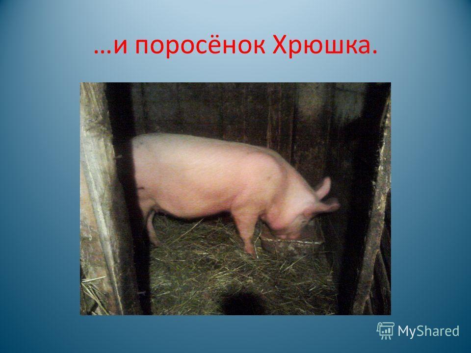 В хозяйстве бабушки Кости Драницина есть коза Зорька…