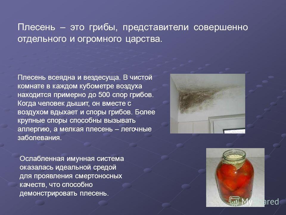 Плесень – это грибы, представители совершенно отдельного и огромного царства. Плесень всеядна и вездесуща. В чистой комнате в каждом кубометре воздуха находится примерно до 500 спор грибов. Когда человек дышит, он вместе с воздухом вдыхает и споры гр