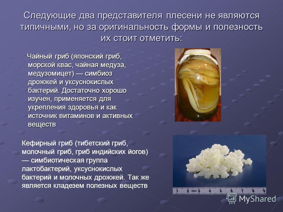 Следующие два представителя плесени не являются типичными, но за оригинальность формы и полезность их стоит отметить: Чайный гриб (японский гриб, морской квас, чайная медуза, медузомицет) симбиоз дрожжей и уксуснокислых бактерий. Достаточно хорошо из