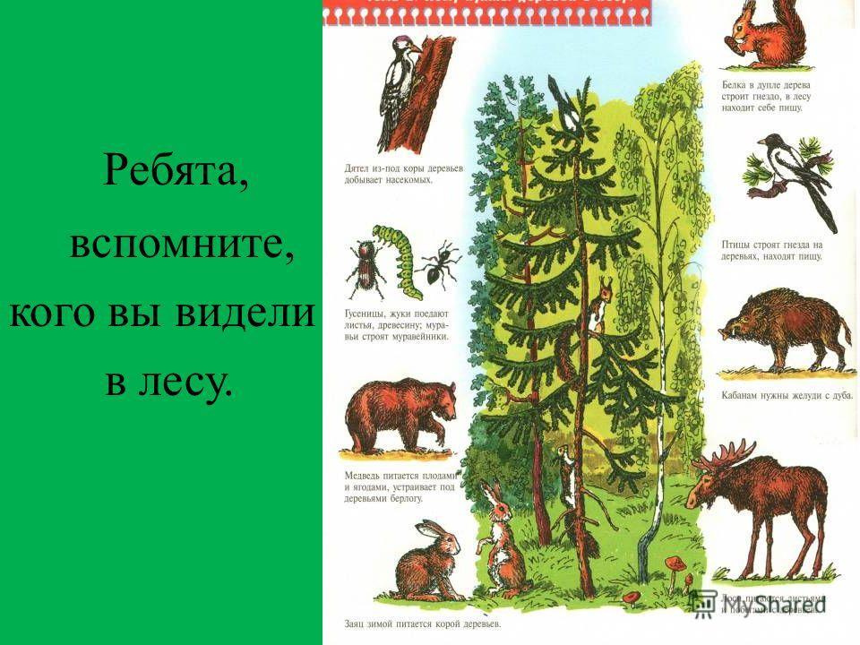 Ребята, вспомните, кого вы видели в лесу.