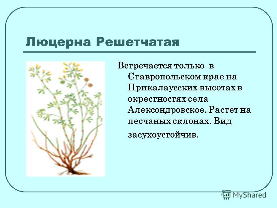 Люцерна Решетчатая Встречается только в Ставропольском крае на Прикалаусских высотах в окрестностях села Алексондровское. Растет на песчаных склонах. Вид засухоустойчив.
