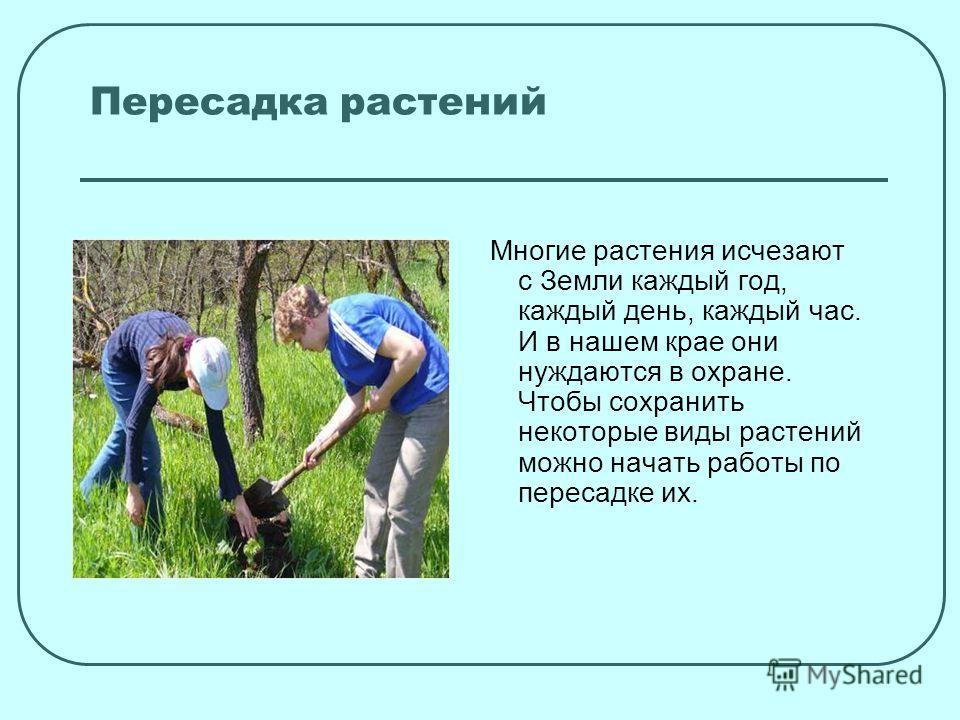 Пересадка растений Многие растения исчезают с Земли каждый год, каждый день, каждый час. И в нашем крае они нуждаются в охране. Чтобы сохранить некоторые виды растений можно начать работы по пересадке их.