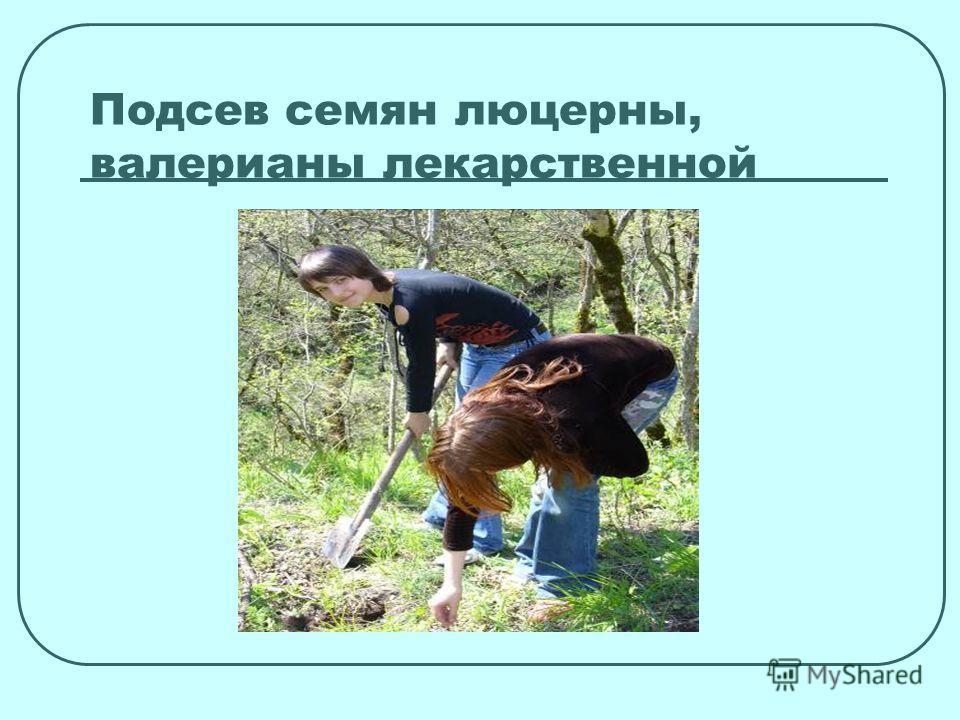 Подсев семян люцерны, валерианы лекарственной