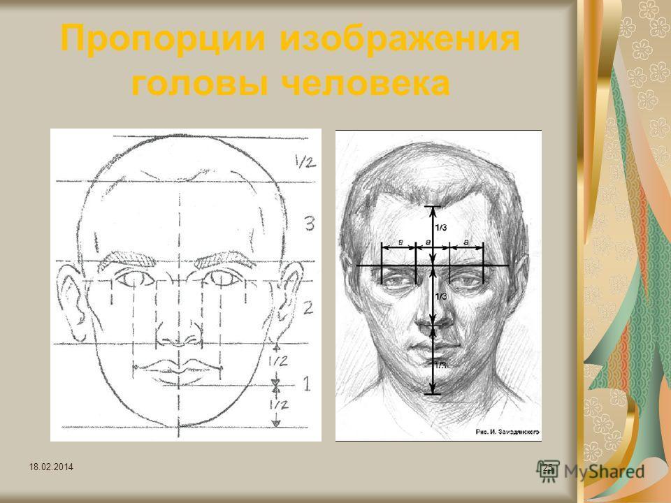 Пропорции изображения головы человека 18.02.2014 25