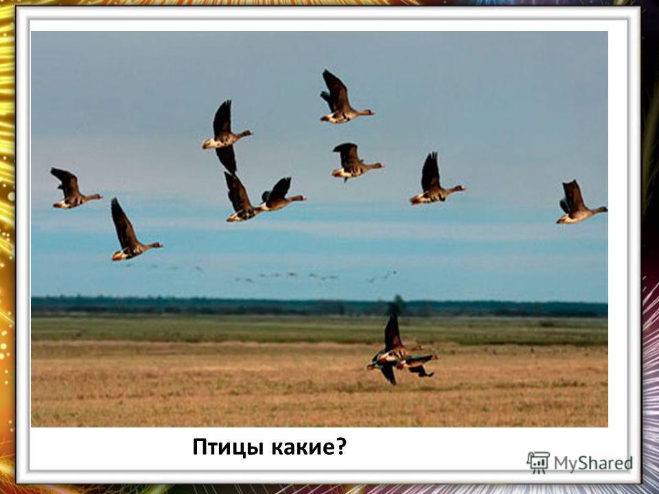 Птицы какие?