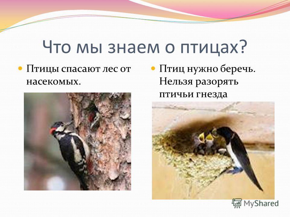 Что мы знаем о птицах? Птицы спасают лес от насекомых. Птиц нужно беречь. Нельзя разорять птичьи гнезда