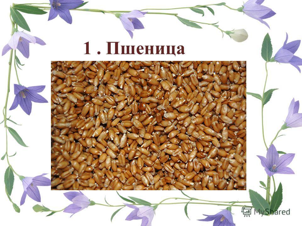 1. Пшеница