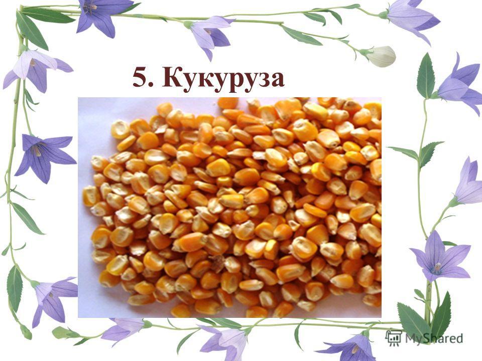 5. Кукуруза