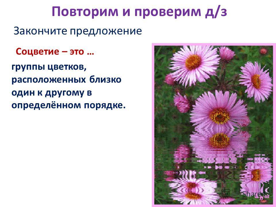 Повторим и проверим д/з Закончите предложение Соцветие – это … группы цветков, расположенных близко один к другому в определённом порядке.