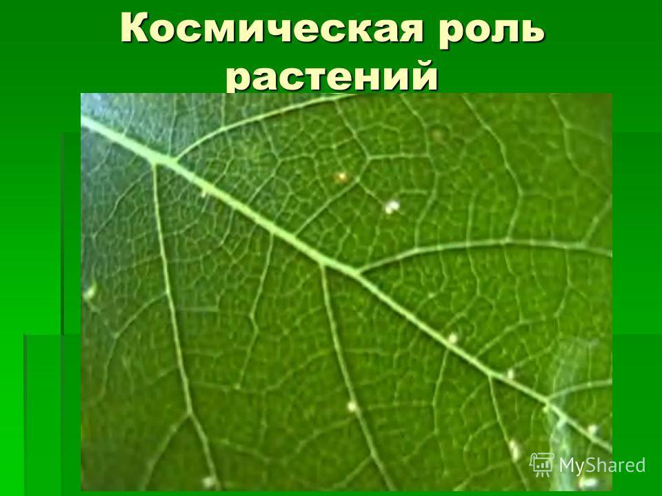 Космическая роль растений