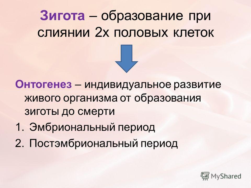 Зигота – образование при слиянии 2х половых клеток Онтогенез – индивидуальное развитие живого организма от образования зиготы до смерти 1.Эмбриональный период 2.Постэмбриональный период