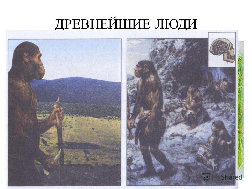 ДРЕВНЕЙШИЕ ЛЮДИ Древнейшие люди появились около 1,5млн. лет назад. Эти невысокие существа, лишенные когтей, больших клыков и волосяного покрова, сумели широко расселиться, их кости находят в Африке, Европе и Азии. Множество скелетов найдено в пещерах