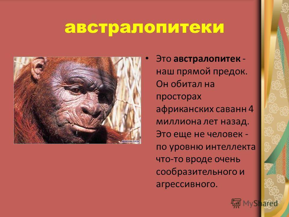 австралопитеки Это австралопитек - наш прямой предок. Он обитал на просторах африканских саванн 4 миллиона лет назад. Это еще не человек - по уровню интеллекта что-то вроде очень сообразительного и агрессивного.