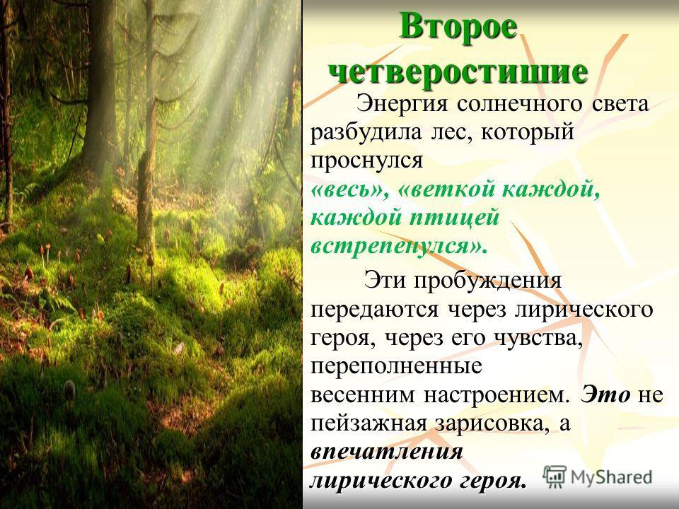 Второе четверостишие Энергия солнечного света разбудила лес, который проснулся Энергия солнечного света разбудила лес, который проснулся «весь», «веткой каждой, каждой птицей встрепенулся». Эти пробуждения передаются через лирического героя, через ег