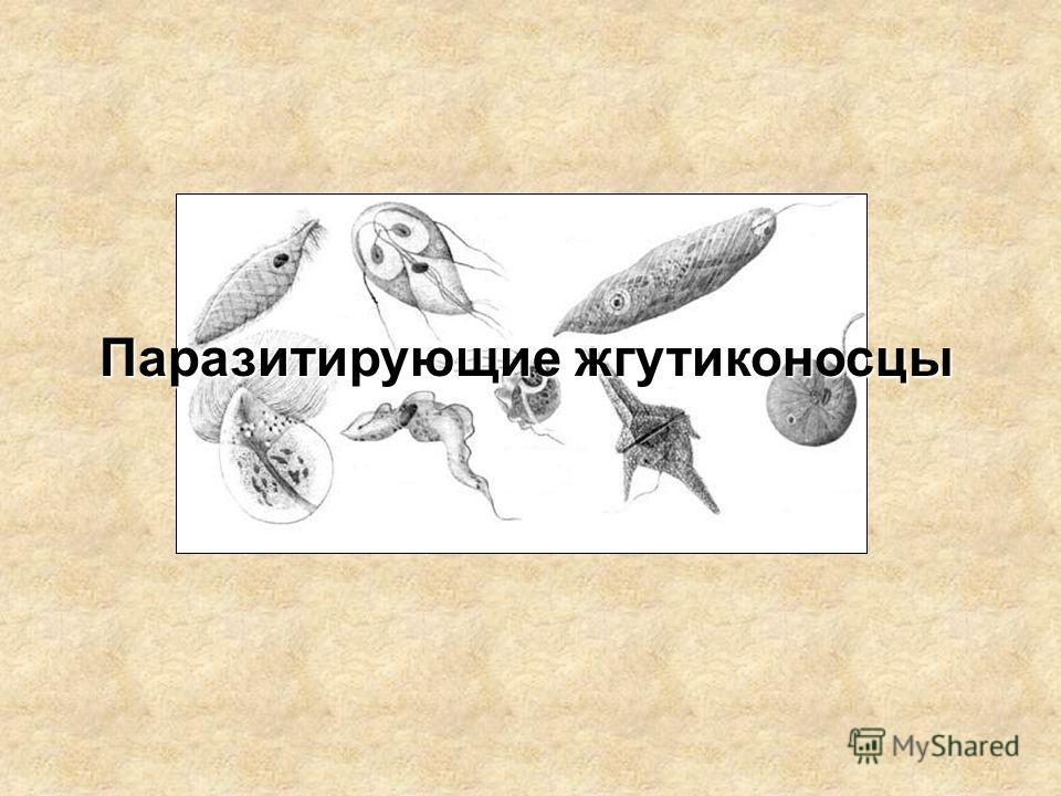 Паразитирующие жгутиконосцы