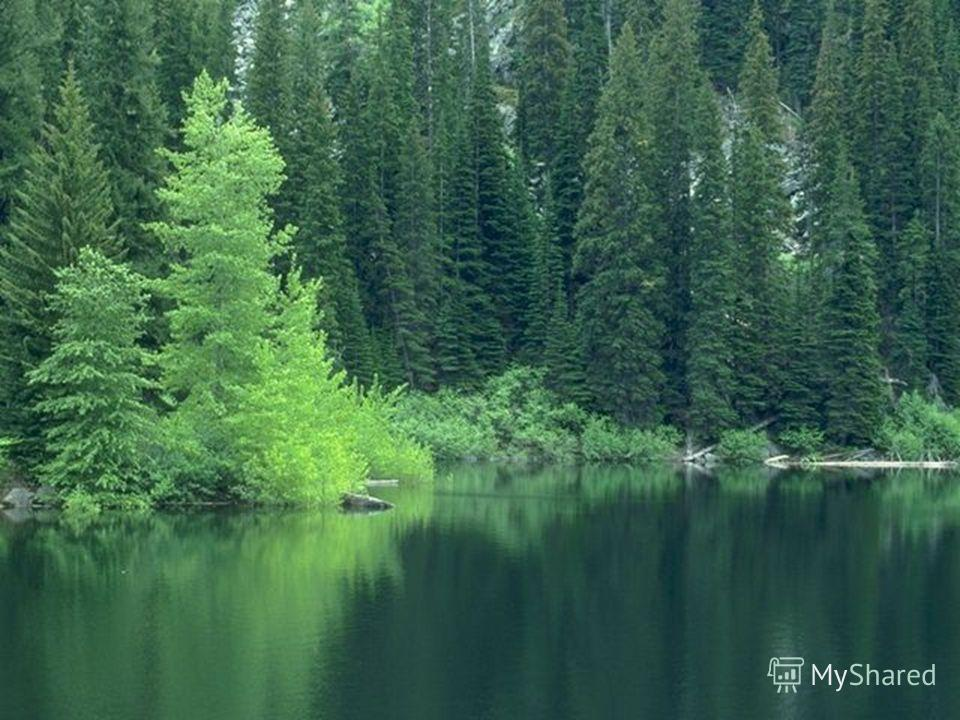 Широка страна моя родная. Много в ней лесов, полей и рек. Я другой такой страны не знаю, Где так вольно дышит человек.