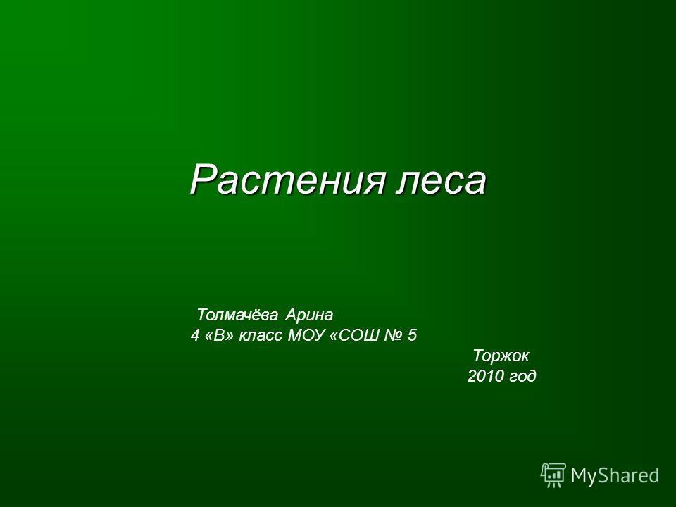Растения леса Толмачёва Арина 4 «В» класс МОУ «СОШ 5 Торжок 2010 год