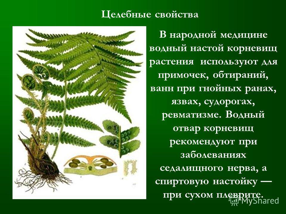 Целебные свойства В народной медицине водный настой корневищ растения используют для примочек, обтираний, ванн при гнойных ранах, язвах, судорогах, ревматизме. Водный отвар корневищ рекомендуют при заболеваниях седалищного нерва, а спиртовую настойку