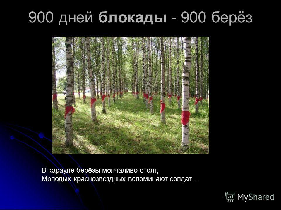 900 дней блокады - 900 берёз В карауле берёзы молчаливо стоят, Молодых краснозвездных вспоминают солдат…