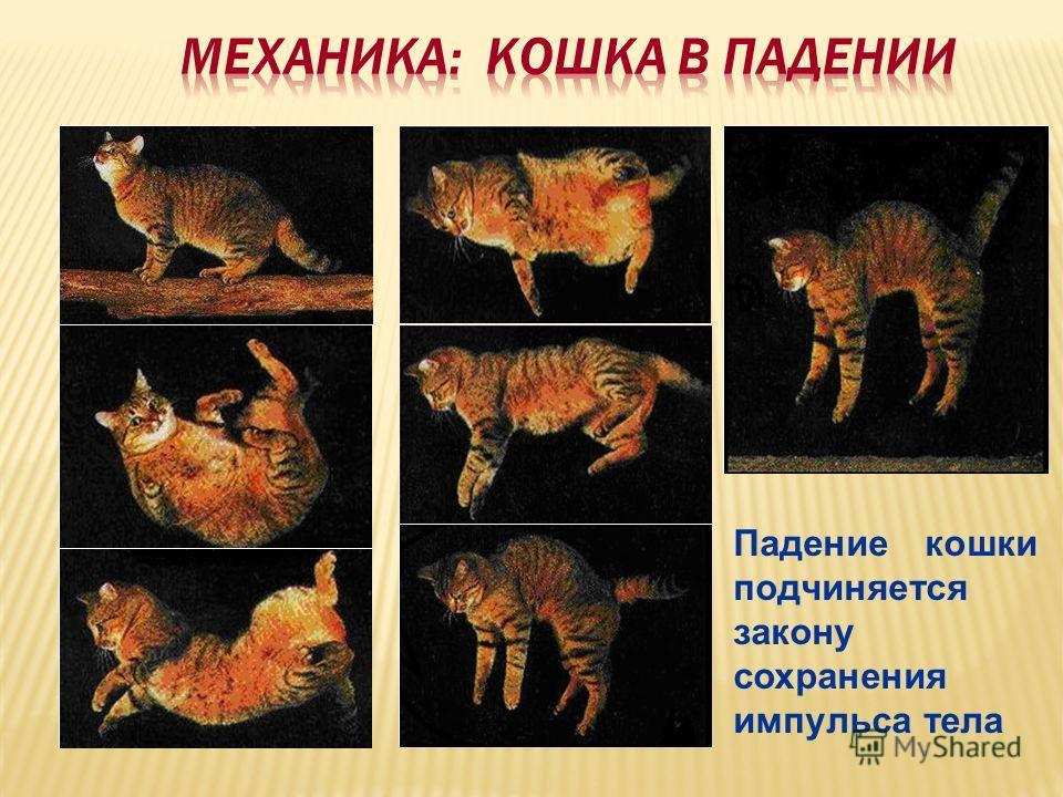 Падение кошки подчиняется закону сохранения импульса тела