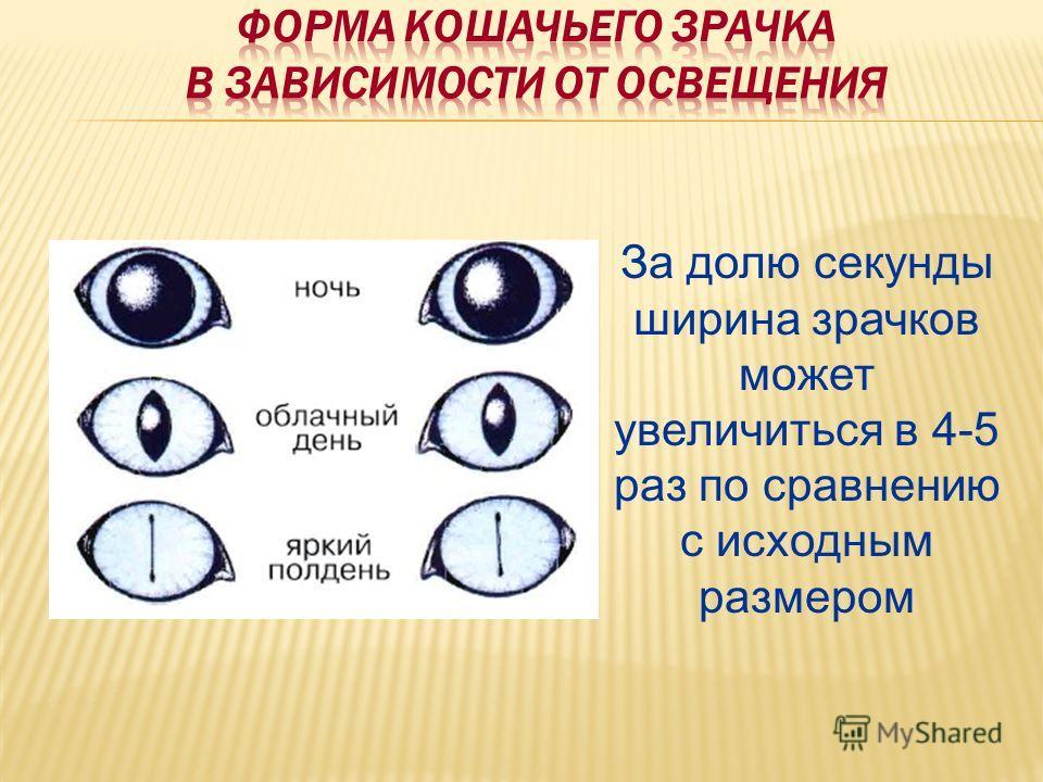 За долю секунды ширина зрачков может увеличиться в 4-5 раз по сравнению с исходным размером
