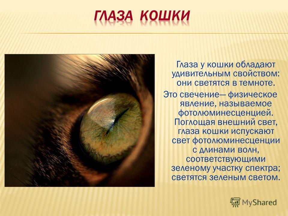 Глаза у кошки обладают удивительным свойством: они светятся в темноте. Это свечение физическое явление, называемое фотолюминесценцией. Поглощая внешний свет, глаза кошки испускают свет фотолюминесценции с длинами волн, соответствующими зеленому участ