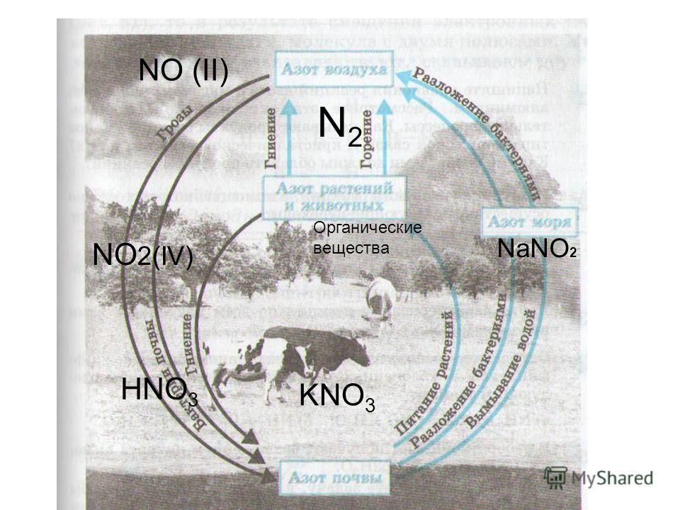 N2N2 NO (II) KNO 3 HNO 3 Органические вещества NaNO 2 NO 2(IV)