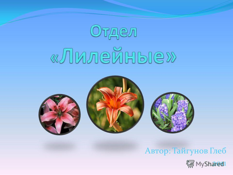 Автор: Тайгунов Глеб 2011